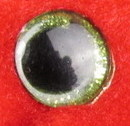 Ellie's sparkling green eye